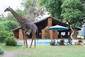 Croc Valley Boutique Camp South Luangwa National Park, Northern Province, Zambia