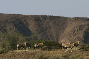 Damaraland's wildlife, Namibia